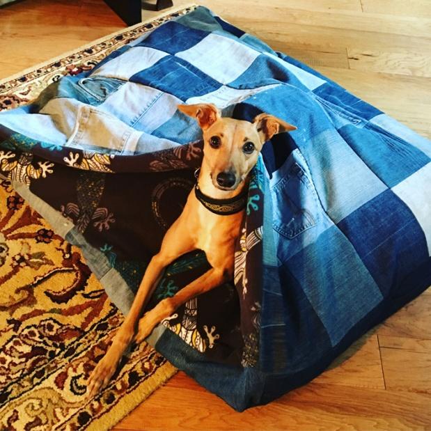 denim-dog-bed